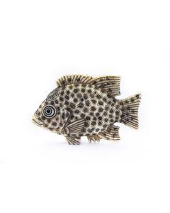 Netsuke Fish Signed Ryoshu Ill 0604